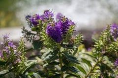 Fleurs colorées étonnantes de ressort en nature photos libres de droits