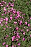 Fleurs colorées étonnantes de ressort en nature photographie stock