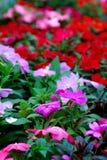 Fleurs colorées Image libre de droits
