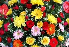 Fleurs colorées Photographie stock libre de droits