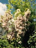 Fleurs colorées Images libres de droits