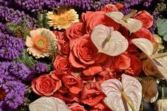 Fleurs colorées Photo stock