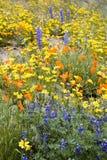 Fleurs colorées Photo libre de droits