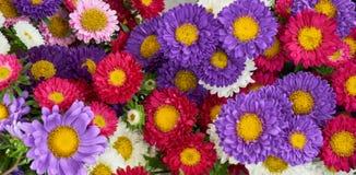 Fleurs colorées photos stock