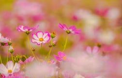 Fleurs colorées 20 photos stock