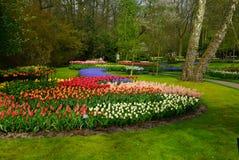 Fleurs colorées au printemps Image stock
