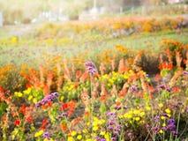 Fleurs colorées avec la lumière du soleil naturelle dans le jardin Photo libre de droits