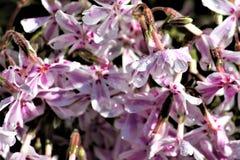 Fleurs colorées avec la rosée photos stock