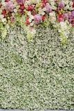 Fleurs colorées avec le mur vert pour épouser le contexte photo stock