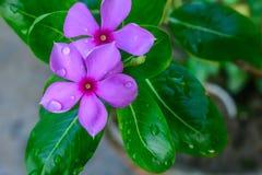 Fleurs colorées avec les feuilles vertes sur des milieux, concept d'amour, calibres pour la conception photos stock