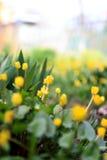 Fleurs colorées beau par ressort dans le jardin Photographie stock