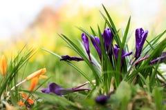Fleurs colorées beau par ressort dans le jardin Photos libres de droits