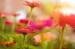 Fleurs colorées d'été Images libres de droits