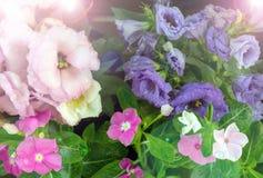 Fleurs colorées d'été Photo stock