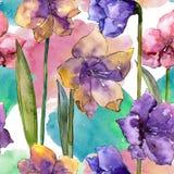 Fleurs colorées d'amaryllis d'aquarelle Fleur botanique florale Modèle sans couture de fond Illustration Stock