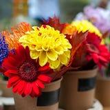 Fleurs colorées d'automne Photo stock