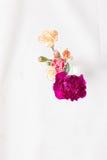 Fleurs colorées d'oeillet photos stock