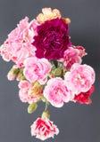 Fleurs colorées d'oeillet photo stock