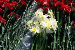 Fleurs colorées d'oeillet dans le magasin photos libres de droits