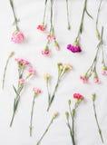 Fleurs colorées d'oeillets photographie stock