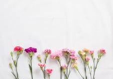 Fleurs colorées d'oeillets Photo stock