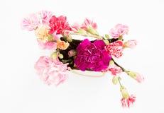 Fleurs colorées d'oeillets Photographie stock libre de droits