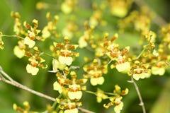 Fleurs colorées d'orchidée Images libres de droits