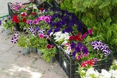 Fleurs colorées dans des boîtes à vendre Image libre de droits