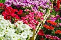 Fleurs colorées dans des boîtes à vendre Photos libres de droits
