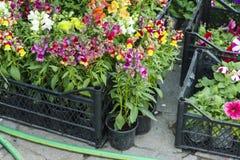 Fleurs colorées dans des boîtes à vendre Photo stock