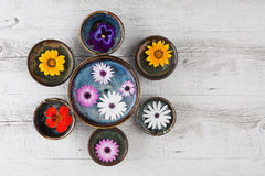 Fleurs colorées dans des cuvettes Photo stock