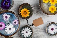 Fleurs colorées dans des cuvettes en céramique Photographie stock