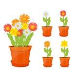 Fleurs colorées dans des pots Image libre de droits