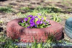 Fleurs colorées dans des pots de pneu Photographie stock