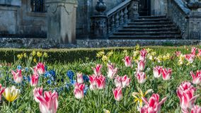 Fleurs colorées dans la fleur, fond de ressort photos libres de droits