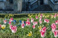 Fleurs colorées dans la fleur, fond de ressort images libres de droits