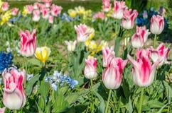 Fleurs colorées dans la fleur, fond de ressort photo stock