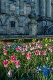 Fleurs colorées dans la fleur, fond de ressort images stock