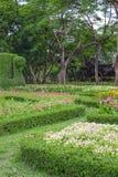 Fleurs colorées dans le beau jardin Photo libre de droits