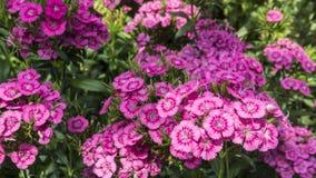 Fleurs colorées dans le jardin Photo stock