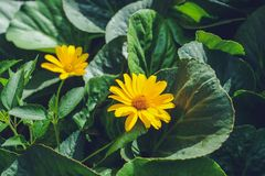 Fleurs colorées dans le jardin le jour lumineux et ensoleillé d'été photographie stock