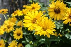 Fleurs colorées dans le jardin le jour lumineux et ensoleillé d'été image stock