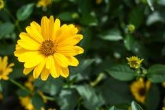 Fleurs colorées dans le jardin le jour lumineux et ensoleillé d'été photographie stock libre de droits