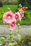 Fleurs colorées dans le jardin le jour lumineux et ensoleillé d'été photos stock