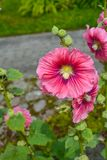 Fleurs colorées dans le jardin le jour lumineux et ensoleillé d'été photo libre de droits