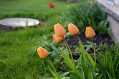Fleurs colorées dans le jardin le jour lumineux et ensoleillé d'été photo stock