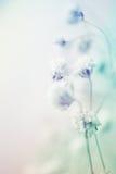 Fleurs colorées dans le style de couleur de vintage sur la texture de papier de mûre Images libres de droits
