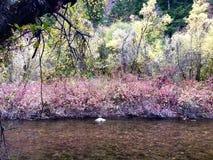 Fleurs colorées de bord de l'eau image stock
