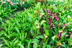 Fleurs colorées de jardin dans le jardin photo stock