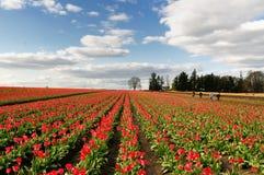 Fleurs colorées de jardin de ressort Photo libre de droits